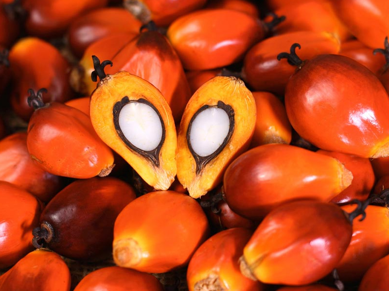 Animal Feed Malaysia, Fat Product Malaysia – Pioneerfeed Bioscience
